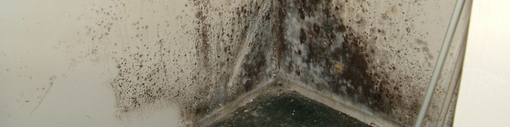 Types Of Dangerous Mold In Your Home